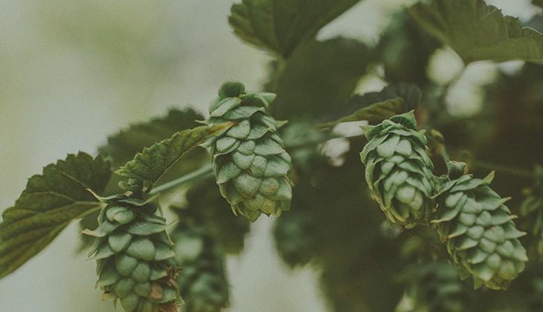 birre-artigianali